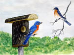 bird art, bird portraits, bluebirds, bird artist, bird painting, blue birds
